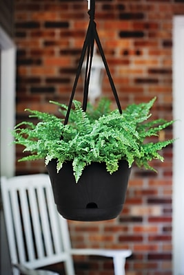 Bloem Lucca Self Watering Hanging Basket 13 Black Lhb1300 Staples