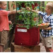 BloemBagz Tomato Vegetable Planter Grow Bag 15 Gallon Union Red (TOM-12)