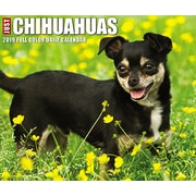 "2019 Willow Creek Press Just Chihuahuas 4.25"" x 5.25"" Box Calendar (03169)"