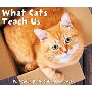 "2019 Willow Creek Press 4.25"" x 5.25"" What Cats Teach Us Box Calendar (03350)"