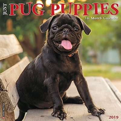 2019 Willow Creek Press Just Pug Puppies 12 X 12 Wall Calendar