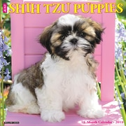 Shih Tzu Puppies For Sale Dallas Ga