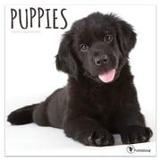 "2019 TF Publishing 7"" X 7"" Puppies Mini Calendar (19-2011)"