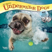 2019 BrownTrout  Monthly Mini Wall Calendar, Underwater Dogs