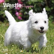 2019 BrownTrout  Monthly Mini Wall Calendar,  White Terrier Puppies