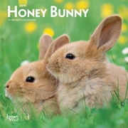 2019 BrownTrout  Honey Bunny Monthly Mini Wall Calendar