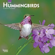 2019 BrownTrout  Hummingbirds, Monthly Mini Wall Calendar
