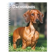 """2019 Brown Trout 6"""" x 7.75"""" Dachshunds, Weekly Engagement Calendar, Animals Dog Breeds (978-1-9754-0188-7)"""
