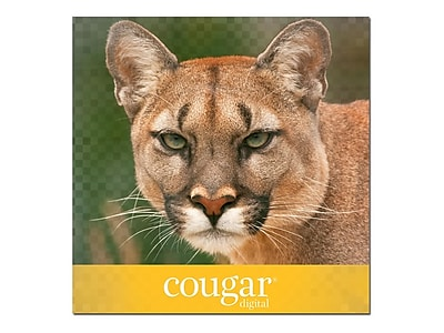 """Domtar Cougar Digital 10% Recycled 11"""" x 17"""" Cover Paper, 80 lbs., 98 Brightness, 250/Ream (2868)"""