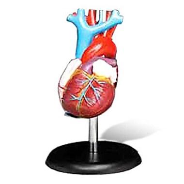 Aww Budget Lifesize Heart Model For Office (Aww355)