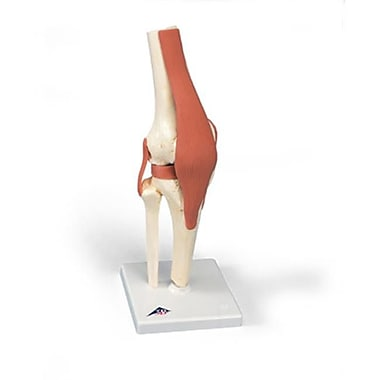 Aww A82-1 Deluxe Functional Knee Joint (Aww912)