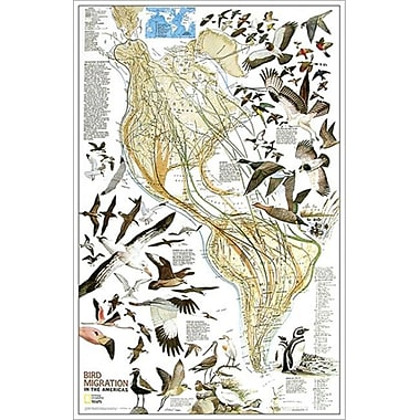National Geographic Map Of Bird Migration - Western Hemisphere - Laminated (NGS568)