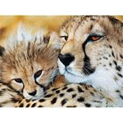 Masterpieces Cheetahs Puzzle - 300Ez Piece (RTL236003)