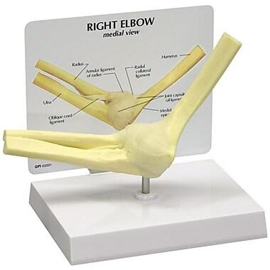 GPI Anatomicals GPI Anatomicals 1830 Elbow Joint Model (RTL161778)