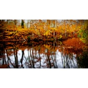 Diamond Decor Wall Art Fall Pond Colors 2- 15 x 27 in. (JW1004CM)