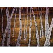 Diamond Decor Wall Art Birch trees 24 x 32 in. (EDC102CL)
