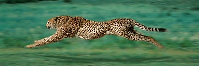Diamond Decor Wall Art Cheetah Running 12 x 36 in. (12006CL)