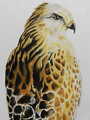 Diamond Decor Wall Art Hawk 12 x 16 in. (EDC020CS)