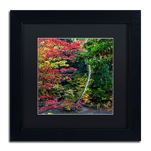 "Trademark Fine Art Kurt Shaffer 'All the Colors of October in Ohio' 11"" x 11"" Matted Framed (886511963702)"