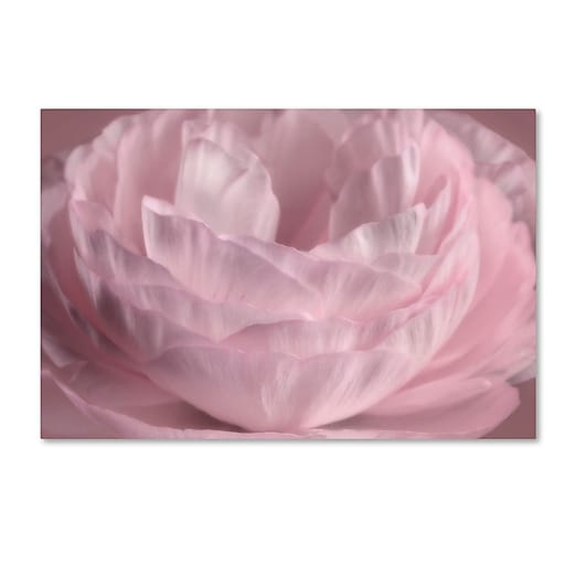 "Trademark Fine Art Cora Niele 'Persian Pink Petals' 16"" x 24"" Canvas Stretched (190836306596)"