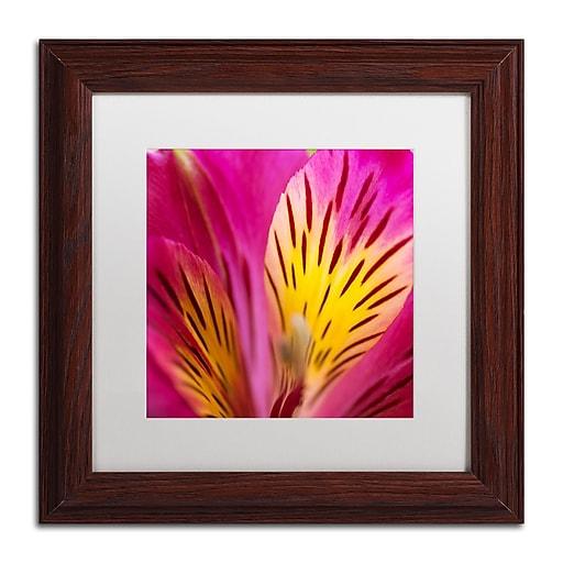 """Trademark Fine Art Kurt Shaffer 'Princess Lily Abstact' 11"""" x 11"""" Matted Framed (886511962866)"""