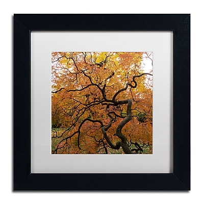 Trademark Fine Art Kurt Shaffer 'October Japanese Maple' 11