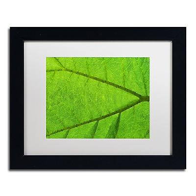 Trademark Fine Art Cora Niele 'Leaf Texture IV' 11