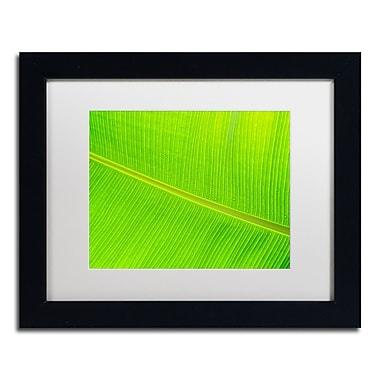Trademark Fine Art Cora Niele 'Leaf Texture II' 11