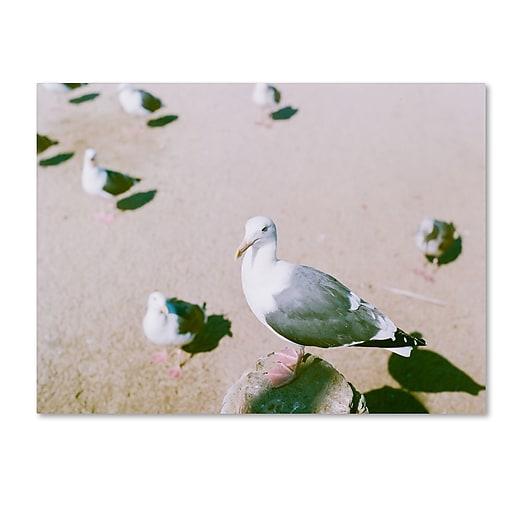 "Trademark Fine Art Ariane Moshayedi 'Seagull Closeup' 14"" x 19"" Canvas Stretched (190836274369)"