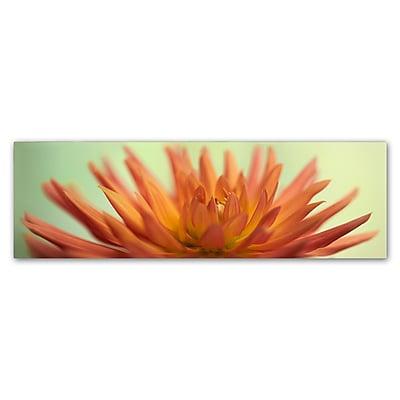 Trademark Fine Art Cora Niele 'Orange Dahlia Scape' 6