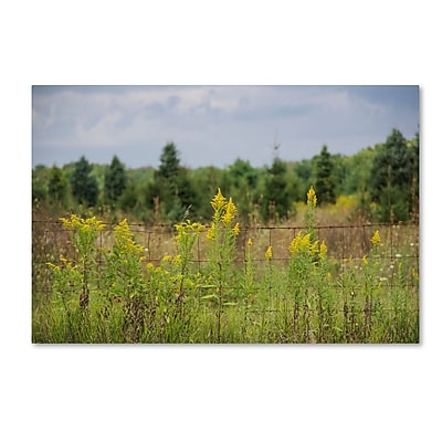 Trademark Fine Art Kurt Shaffer 'Goldenrod Fence' 12