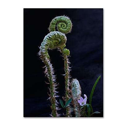 Trademark Fine Art Kurt Shaffer 'Fern and Flower' 14