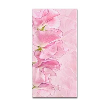 Trademark Fine Art Cora Niele 'Pink Sweet Peas' 12