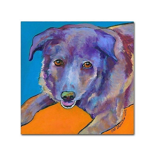 """Trademark Fine Art Pat Saunders-White 'Butch' 18"""" x 18"""" Canvas Stretched (190836057801)"""