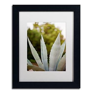 Trademark Fine Art Ariane Moshayedi 'Succulents' 11