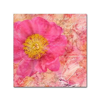 Trademark Fine Art Cora Niele 'Peony - Feminine Beauty' 18