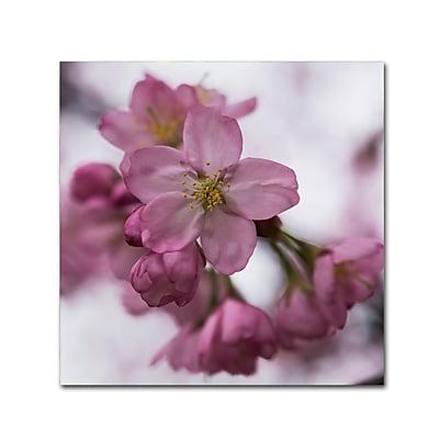 Trademark Fine Art Kurt Shaffer 'Cherry Pink' 14