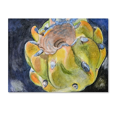 Trademark Fine Art Jennifer Redstreake 'Cactus Fruit' 14