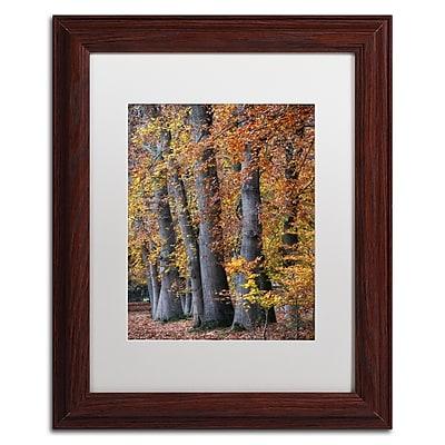 Trademark Fine Art Cora Niele 'Autumn Beeches II' 11