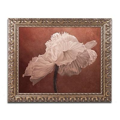 Trademark Fine Art Cora Niele 'White Poppy'd Art 16