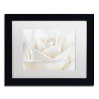 Trademark Fine Art Cora Niele 'Pure White Rose' 11