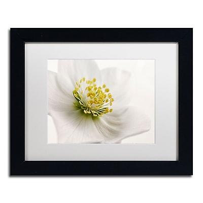 Trademark Fine Art Cora Niele 'White Helleborus' 11
