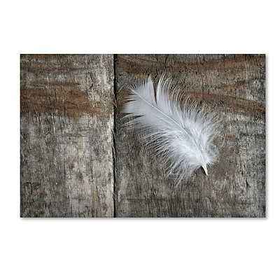 Trademark Fine Art Cora Niele 'Feather on Wood II' 12