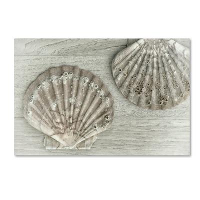 Trademark Fine Art Cora Niele 'Two King Scallop Shells' 30