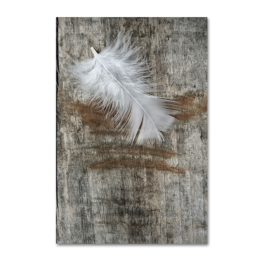 "Trademark Fine Art Cora Niele 'White Feather on Wood' 12"" x 19"" Canvas Stretched (190836255962)"