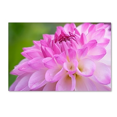 Trademark Fine Art Cora Niele 'Cerise Pink Dahlia' 12