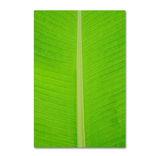 "Trademark Fine Art Cora Niele 'Leaf Texture I' 12"" x 19"" Canvas Stretched (190836314140)"