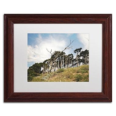 Trademark Fine Art Ariane Moshayedi 'Presidio Trees' 11