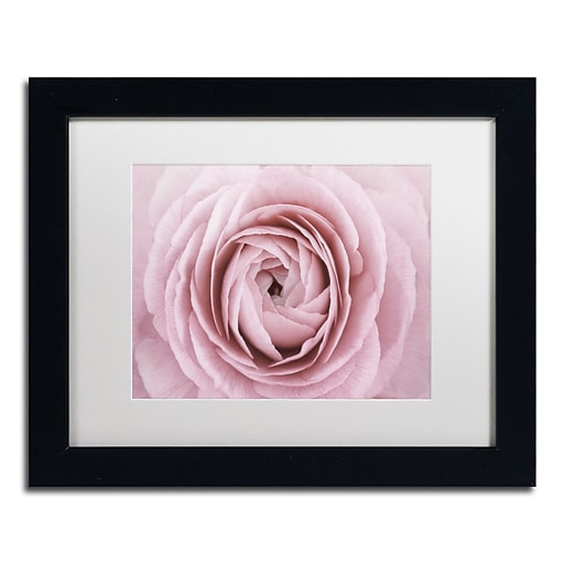 "Trademark Fine Art Cora Niele 'Persian Buttercup' 11"" x 14"" Matted Framed (190836306428)"