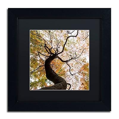 Trademark Fine Art Kurt Shaffer 'Under a Japanese Maple 2' 11